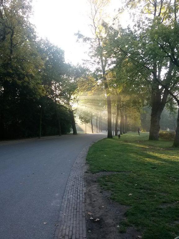 Zonnestralen in het Vondelpark